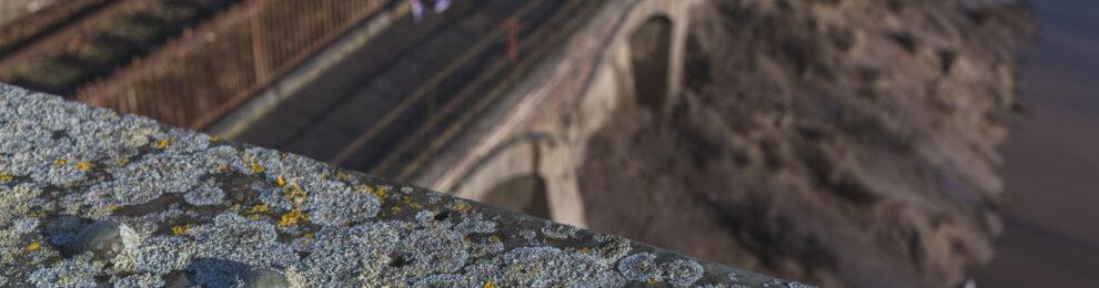 Vauxhall Lichen