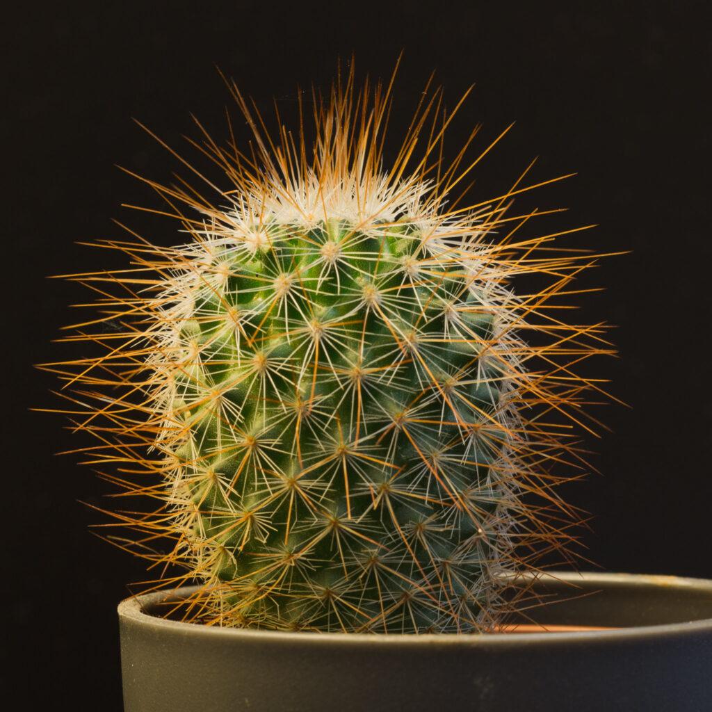 Teeny cactus
