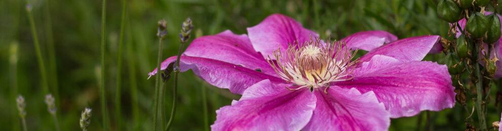 Frayne Road Flower