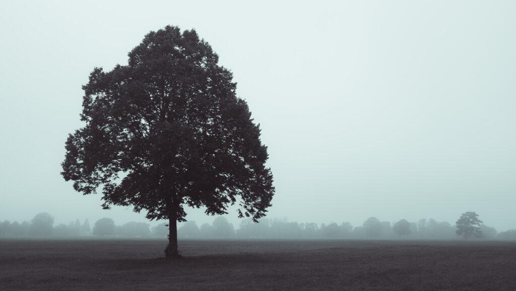 Autumn tree in the mist