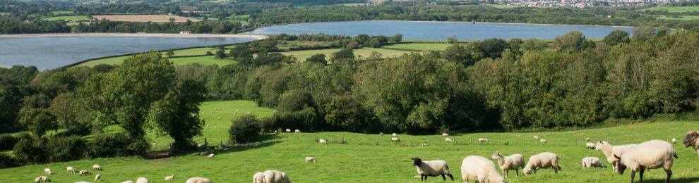 Barrow Gurney Reservoirs