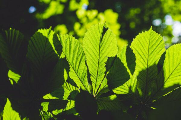 Leafy Clifton Village